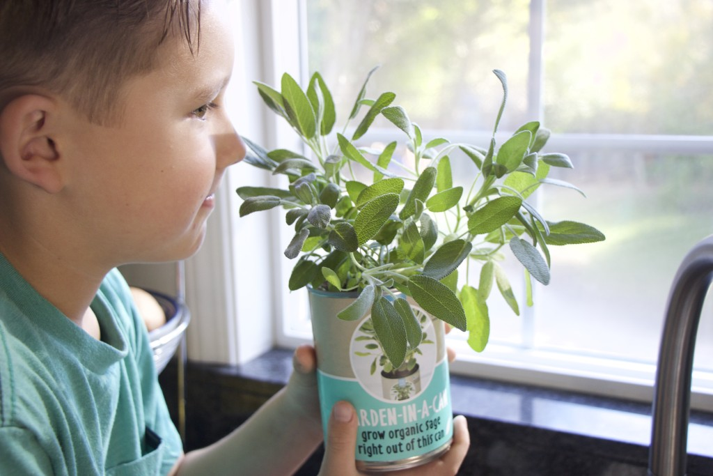 boy kid grow sage plant indoor gardening garden in a can easy