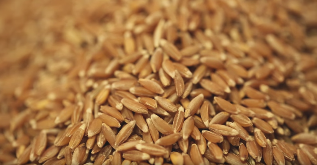 WholeWheatKernel