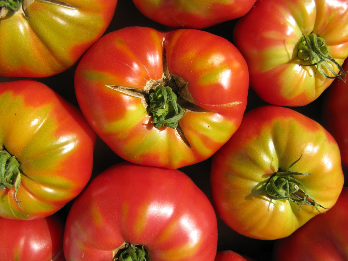 end_of_summer_tomatoes